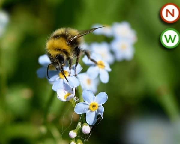 Bee friendly pond plant collection