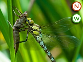 Dragon & Damsel Fly Collection