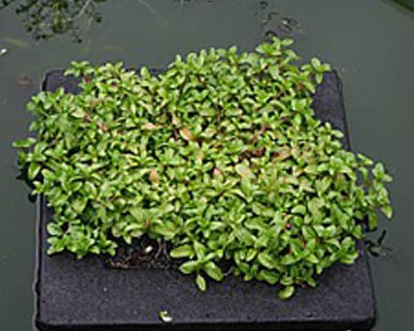 Floating plant island