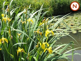 Large native pond 1 25 sqm