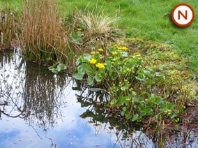 Native Marginal pond plants for partly shady areas