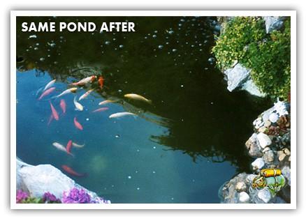 Pond after Aquaplancton