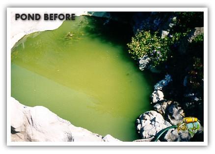 Pond before Aquaplancton