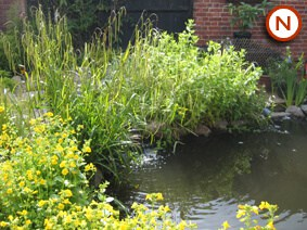 Small native pond 2 5 sqm