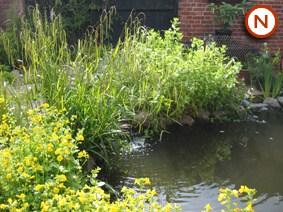 Small native pond 2 5 sqm